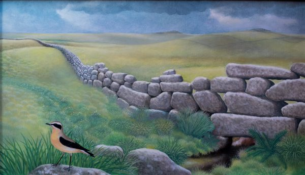 High moorland scene with drystone wall and wheatear