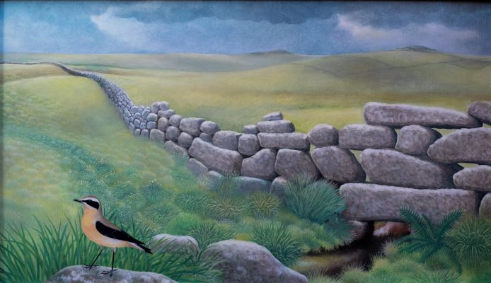High moorland scene with drystone wall and wheatear